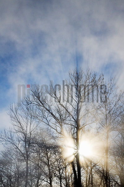Backlit Tree and God Rays