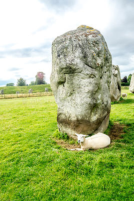 Standing Stone And Sheep- Avebury Henge, England
