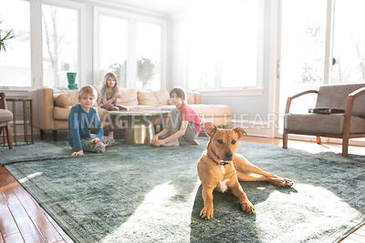 Brown Dog Laying on Rug with Kids in Background