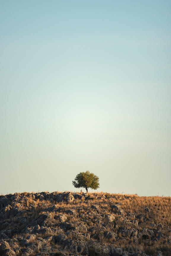 Lone Tree, Nafplio, Greece
