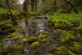 Moss covered rocks in the Wye, Chee Dale
