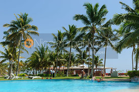 Swimming pool and palm trees, Salalah, Oman