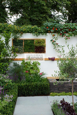 Buxus, Contemporary garden, garden designer, Olive tree, Small garden, Tropaeolum majus, Urban garden, Common Box, Digital, Foliage wall, Green wall, Vegetation wall, Wall decoration
