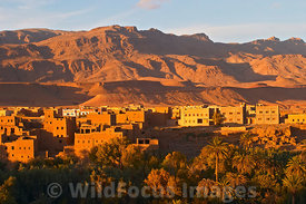 Tinerhir on the edge of the High Atlas, Morocco, Landscape