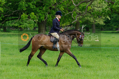 Class 33 - BSPS RIHS Anglo and Part Bred Arab <=148cms photos