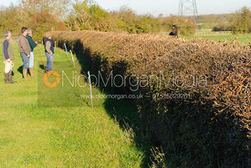 Fence 8 - hedge