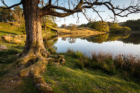 Loughrigg Roots