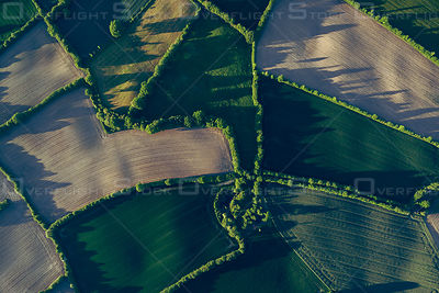 Early Morning Corn Agriculture Germany