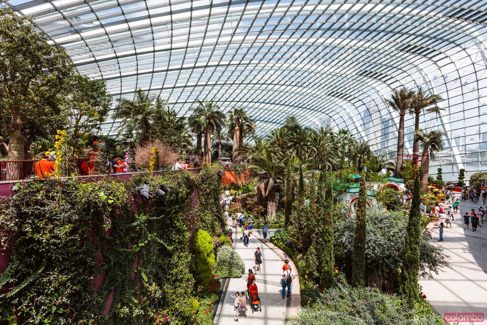 Matteo Colombo Travel Photography | Palm trees, Flower Dome, Gardens ...