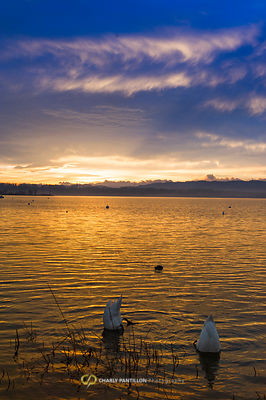 lake of murten