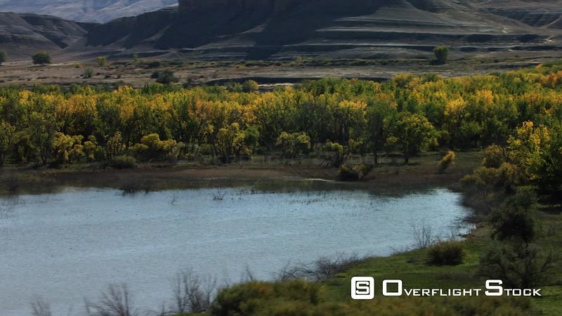 A forest of golen Cottonwood trees transitions to high desert in the Bighorn River valley in norhtern Wyoming