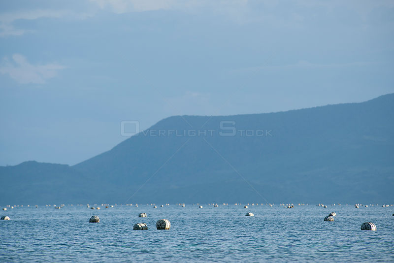 Jewelmer Pearlfarm, floats holding oyster cages in open water, Palawan, Philippines, May 2009, cultured Golden South Sea pearls