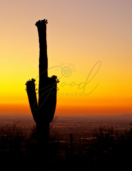 Sunset over Phoenix With Cactus