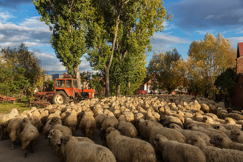 Traffic Jam in Rural Romania