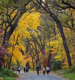 Fall Colors in Bidwell Park, Chico #7