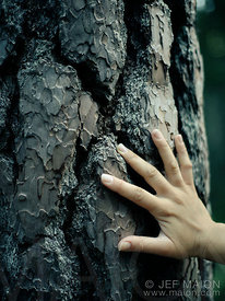 Hand on tree bark