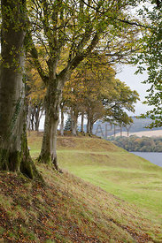 Beech trees at top of tiered grassy banks overlooking large loch