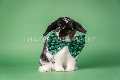 Bunny with bow tie