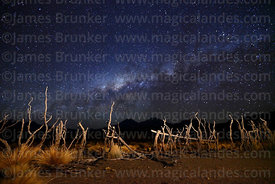 Rustic corral for livestock made of Polylepis tarapacana trunks and Milky Way Galactic Centre, Sajama National Park, Bolivia