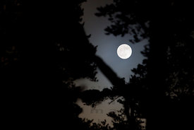 Full Moon in the Old Forest of Pyhä-Häkki
