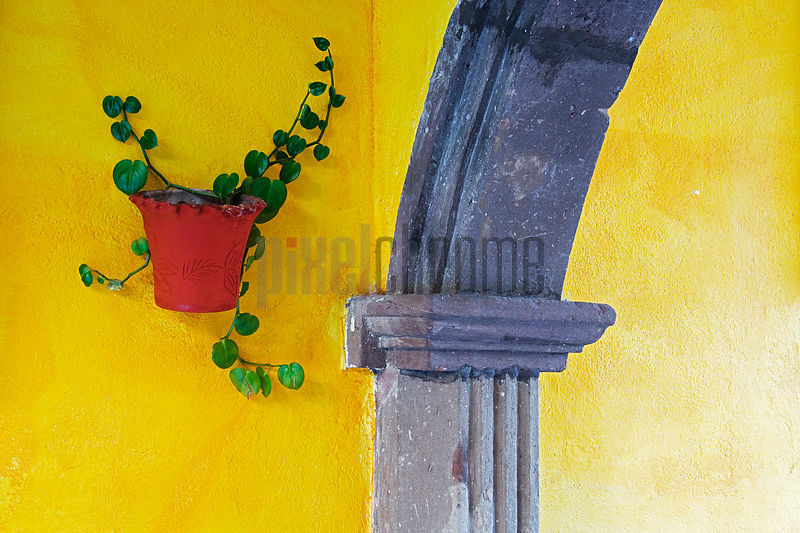 Potted Plant Hanging on Yellow Wall