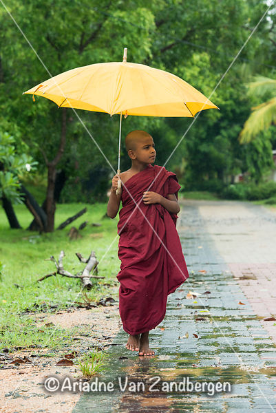 Young buddhist monk carrying an umbrella in the rain, Dimbulagala Buddhist Monastery Near Polonnaruwa, Sri Lanka
