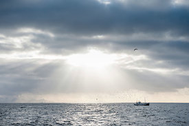 Cod fishing, Lofoten, Norway. Shot on commission for Lonely Planet magazine.