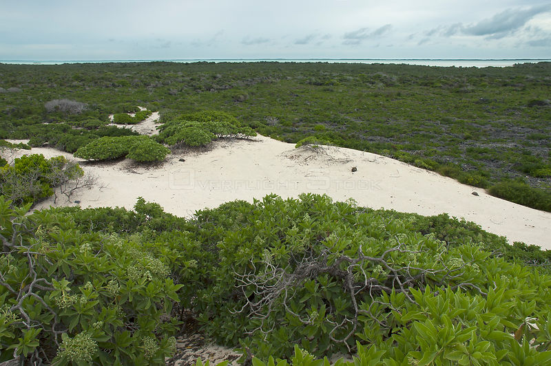 Aldabra Giant Tortoises (Aldabrachelys gigantea) aerial view of the dunes on the south coast of Grand Terre, lagoon in distance, Natural World Heritage Site, Aldabra
