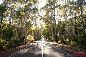 Road through eucalyptus forest, Victoria, Australia
