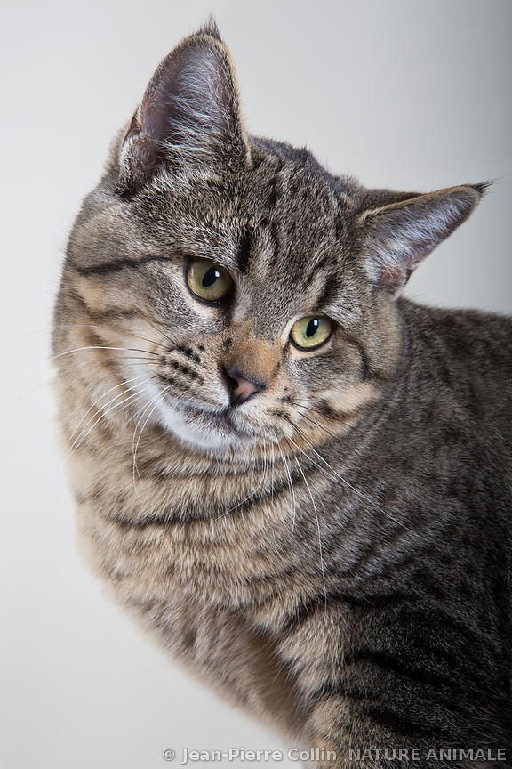 nature animale photo animaux et nature par le photographe animalier jean pierre collin chaton. Black Bedroom Furniture Sets. Home Design Ideas