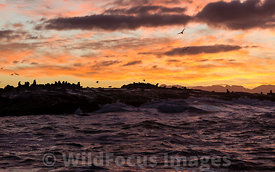Sunrise at Seal Island in False Bay, Simon's Town, South Africa; Landscape