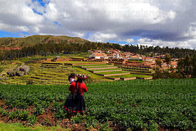 Quechua woman wearing traditional dress walking through potato field, village and terraces of Inca site in background, Chinchero, near Cusco, Peru