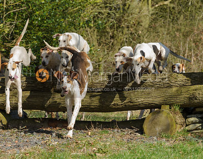 The Quorn Hunt at Blackhill Farm 10/3 photos