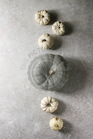 Grey and white pumpkins