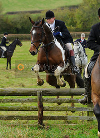 William Bell jumping a hunt jump - The Cottesmore Hunt at Somerby, 2-11-13