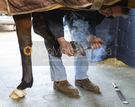 Smoke pours from a horse's hoof as a Farrier applies a hot shoe to it