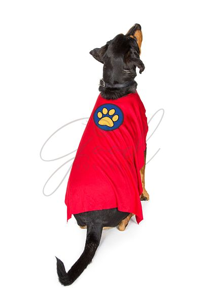 Dog Wearing Super Hero Cape Facing Away