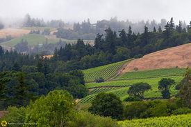 Vineyards and Hills, Anderson Valley #2