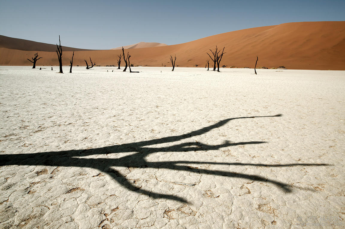 Dead tree shadow in desert