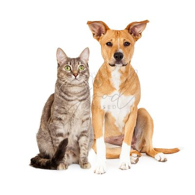 Yellow Dog and Tabby Cat