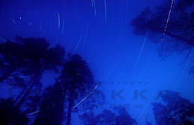 Startrails above the old forest
