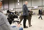 Presenteren van hond voor de jury | Presenting dog to the jury