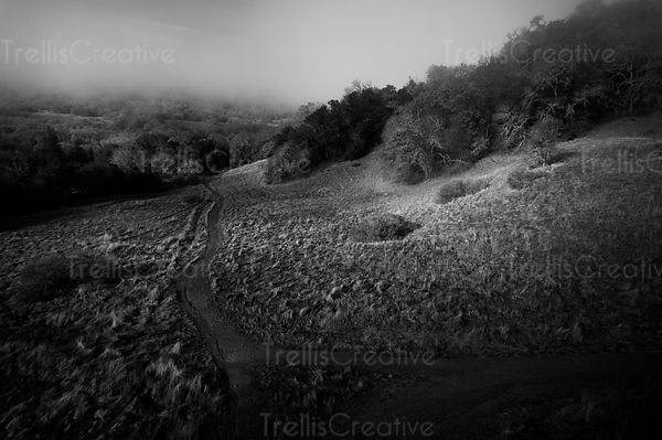 Black and white aerial view of a haunting hillside with a path rinto the woods