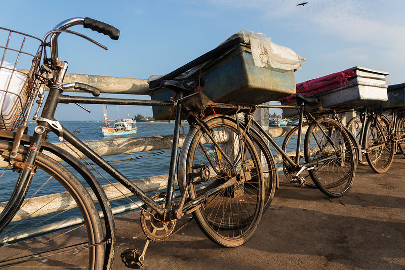 Bicycles Lined up to Carry Fresh Fish to Market