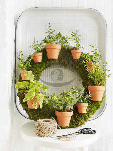 Herb Garden Photos