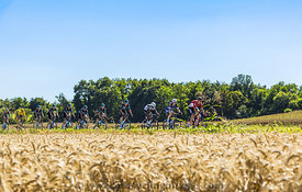 The Peloton in the Plain - Tour de France 2016