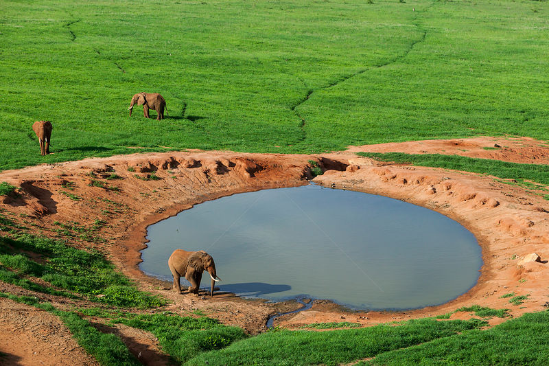 Aerial view of Elephants (Loxodonta africana) at watering hole in the rainy season, Tsavo East National Park, Kenya.