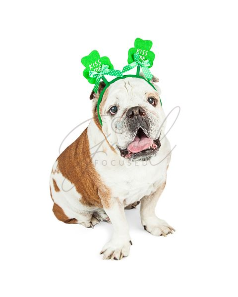 Bulldog Funny Kiss Me St Patricks Headband