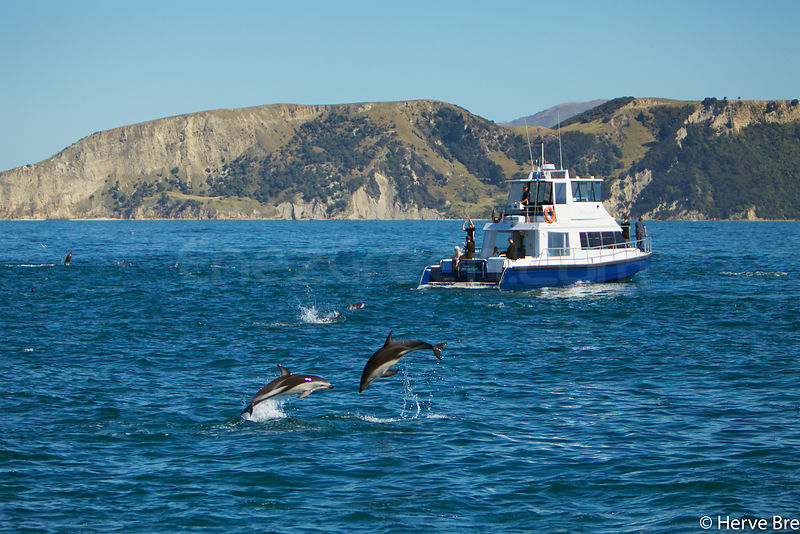 New-Zealand sea activities photos