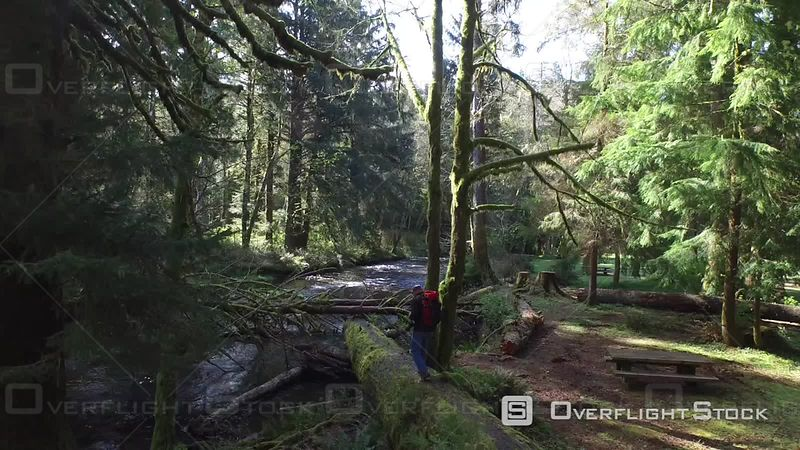 Aerial Footage of Man Walking Across Fallen Tree Oregon USA Aerial Footage